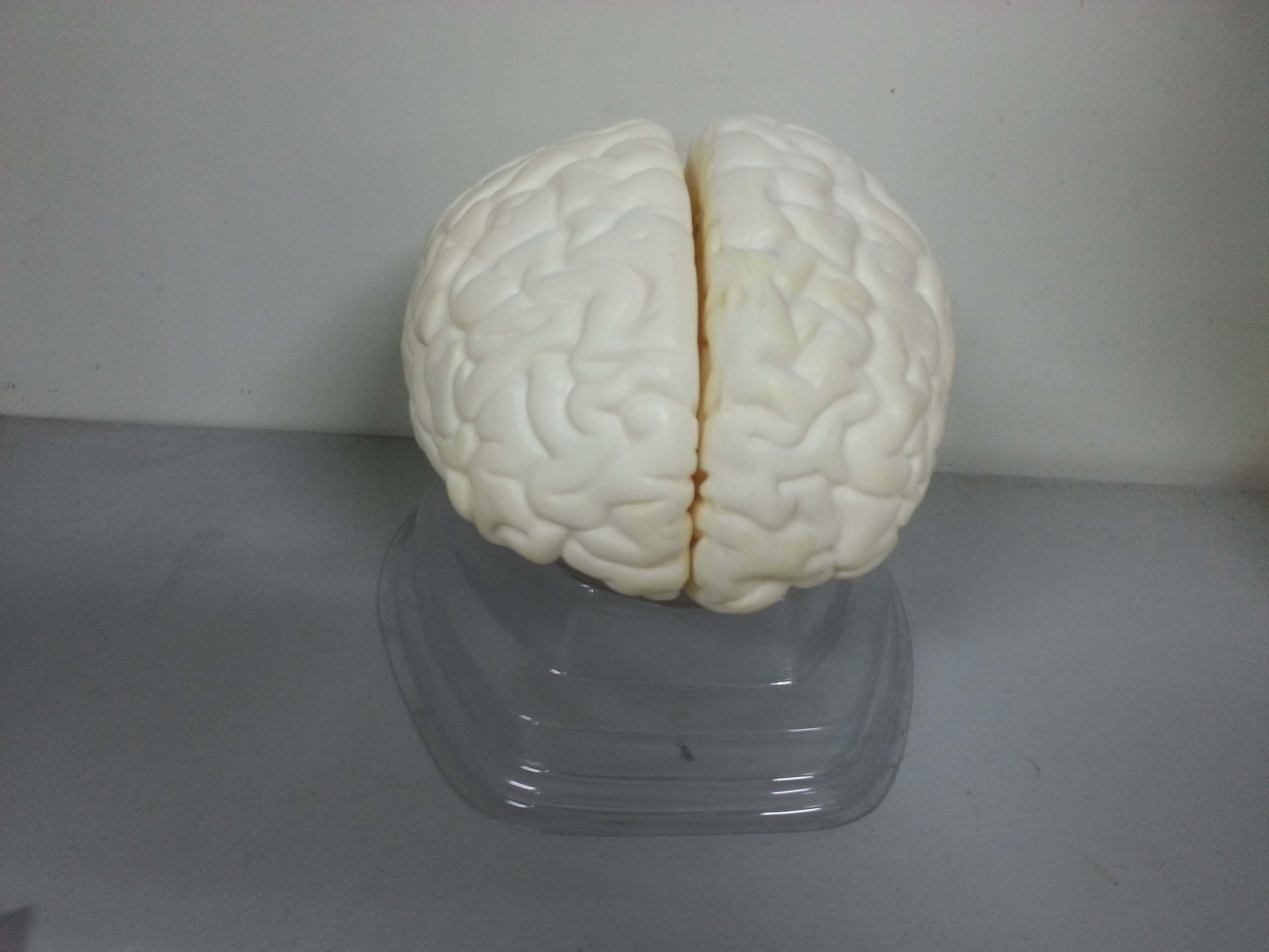 מוח מתפרק