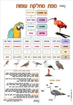 מפת מחלקת עופות