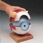 eye4590l(1).JPG